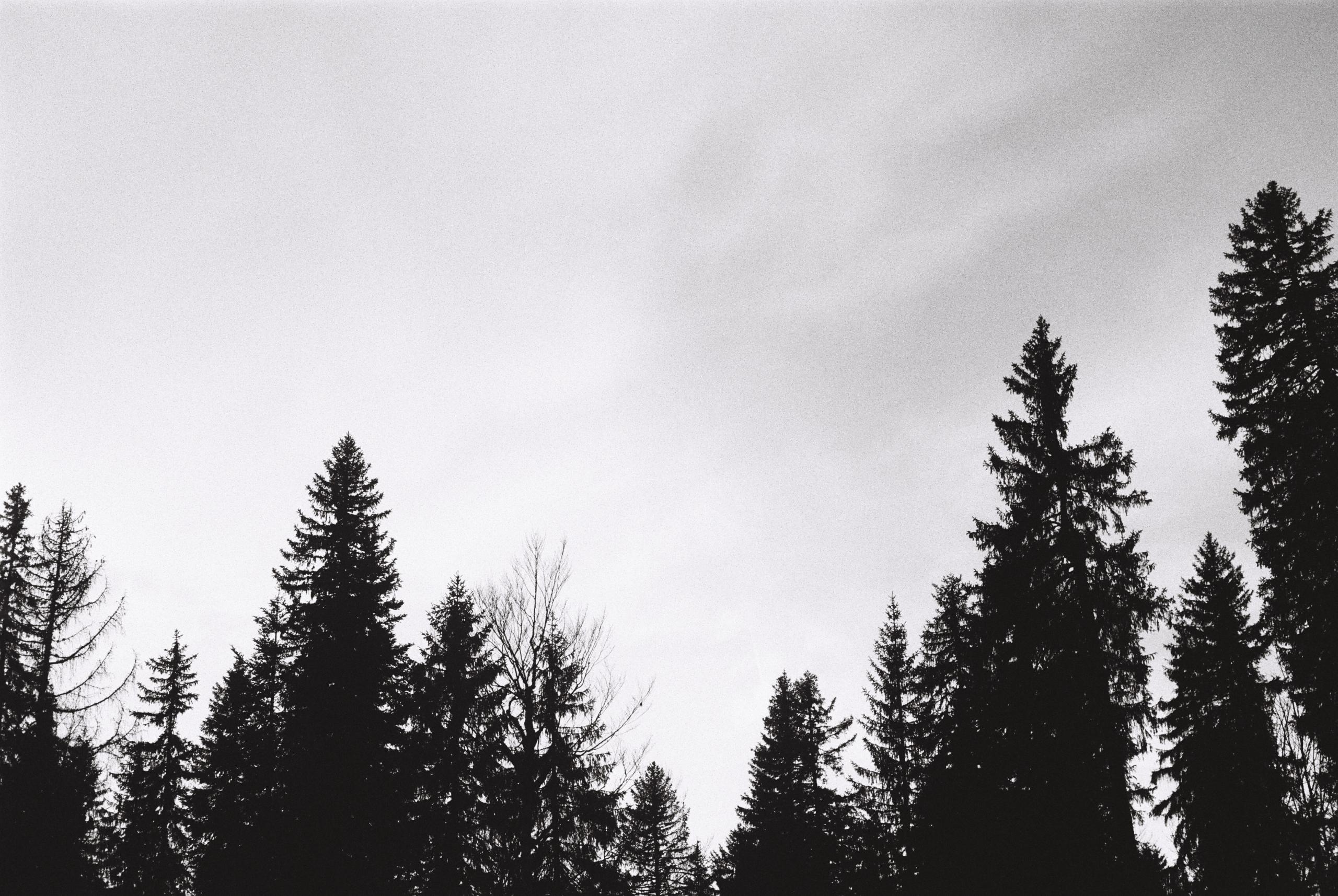 Cime des arbres sur la Grande Traversée du Jura