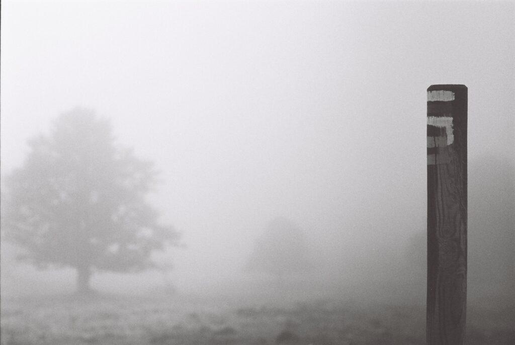 Brume dans le Jura